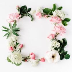 Květiny růže - rámeček