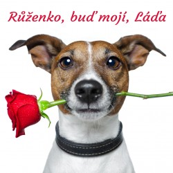 Pejsek - Růže pro tebe 1
