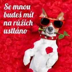 Pejsek - Mám na růžích ustláno