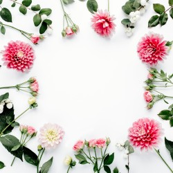 Chryzantémy a růže - rámeček