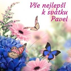 Motýlci, modré a růžové květy