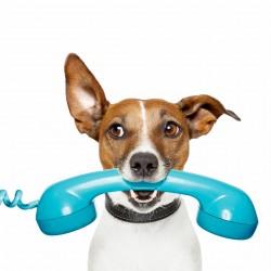 Zavolej mi!